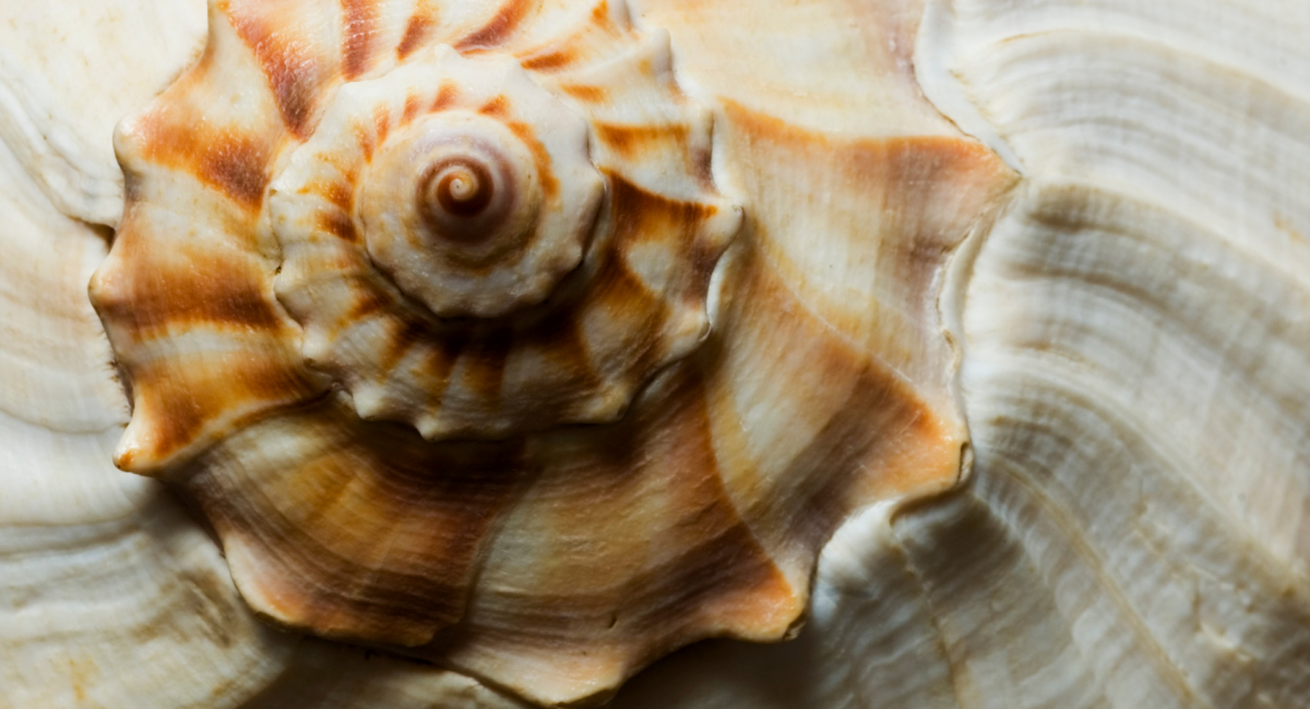 mandala en una concha del mar
