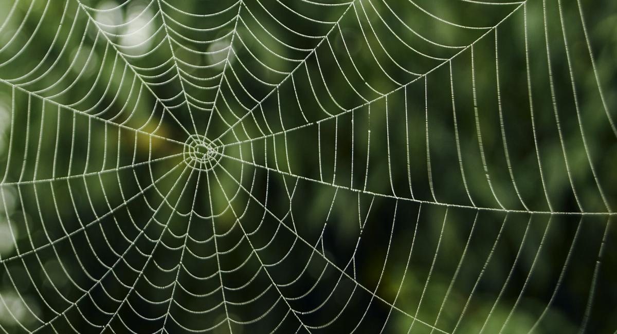 mandala en una tela de araña